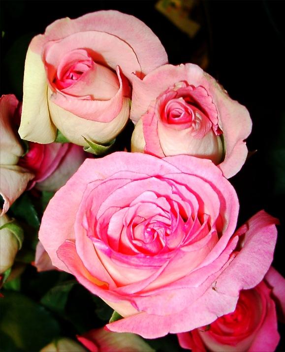 02 04 2010 розовые розы mekaelb 226 0 0 0