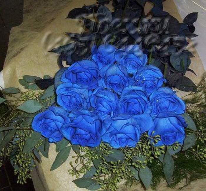 Синие розы картинки - e1d