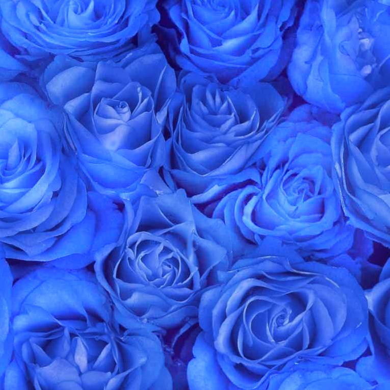 Картинки синие розы скачать бесплатно - 3a096